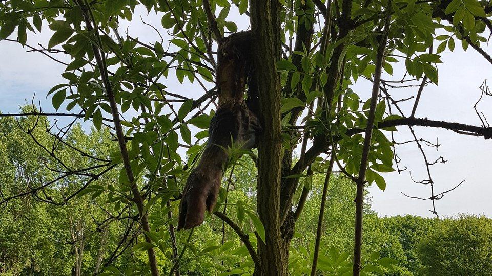 Afgehakte dierenpoten in het bos lijken aan de orde van de dag