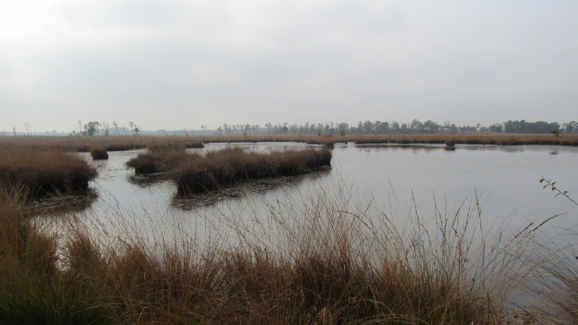 Koninklijke Nederlandse Vereniging voor Natuurtoezicht